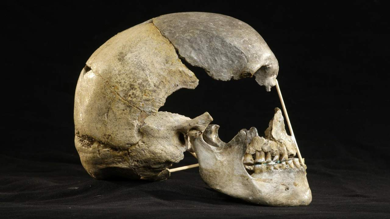 This nasty old skull, the oldest human genome, and a cow DNA mistake