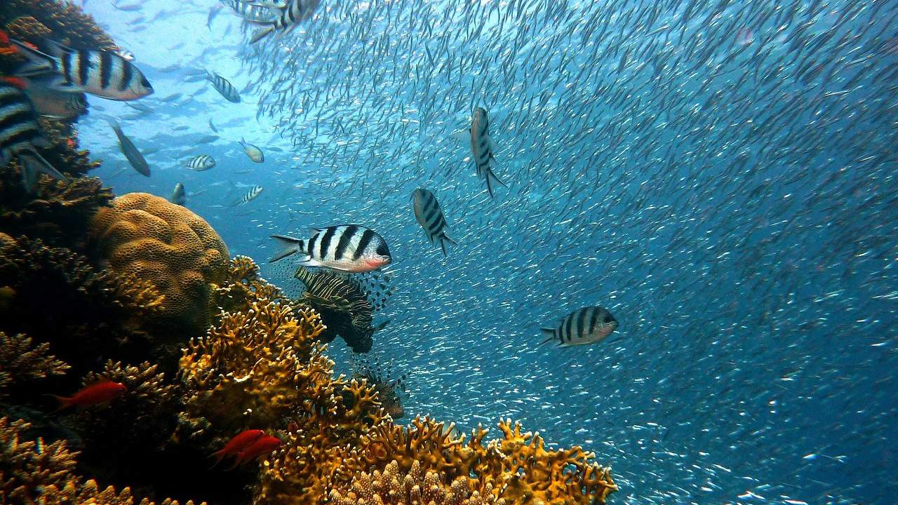 Project Ocean-Shot aims to restore dead coral reefs