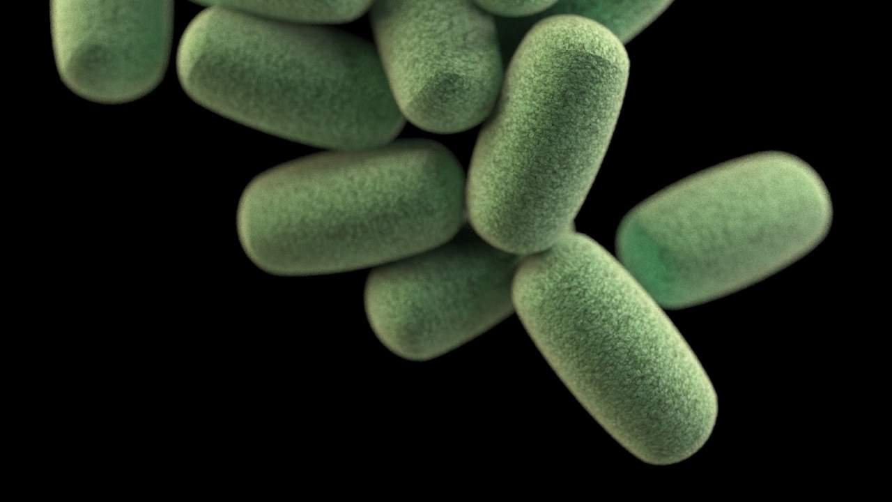 Eating a diet very low in calories paves way for risky gut bacteria