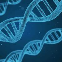 Scientists discover that RNA segments can be written back into DNA