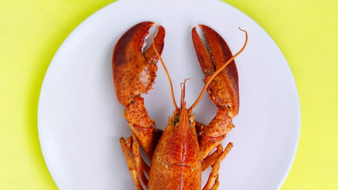 Scientists had lobsters vape weed to figure out if they can get high