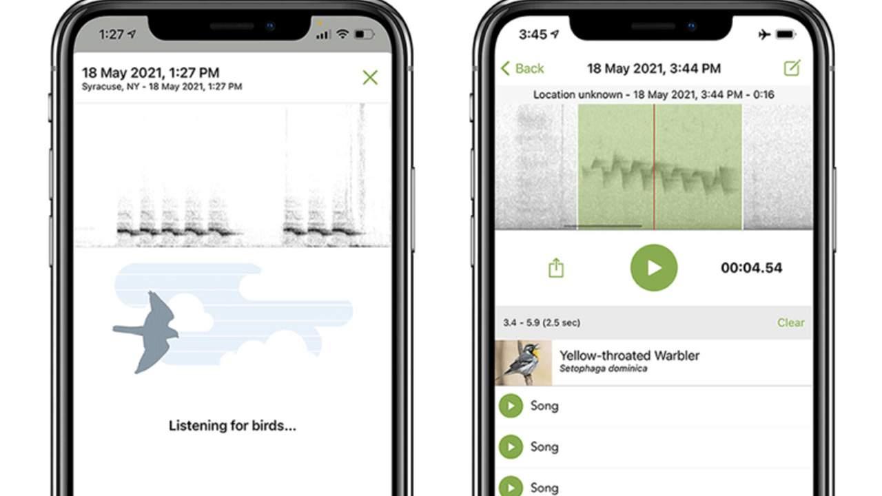 Merlin Bird ID app identifies birds you hear singing