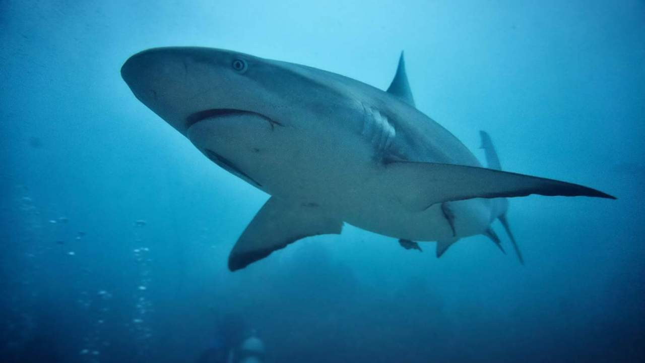 If not for this near-extinction mystery the oceans would be full of sharks