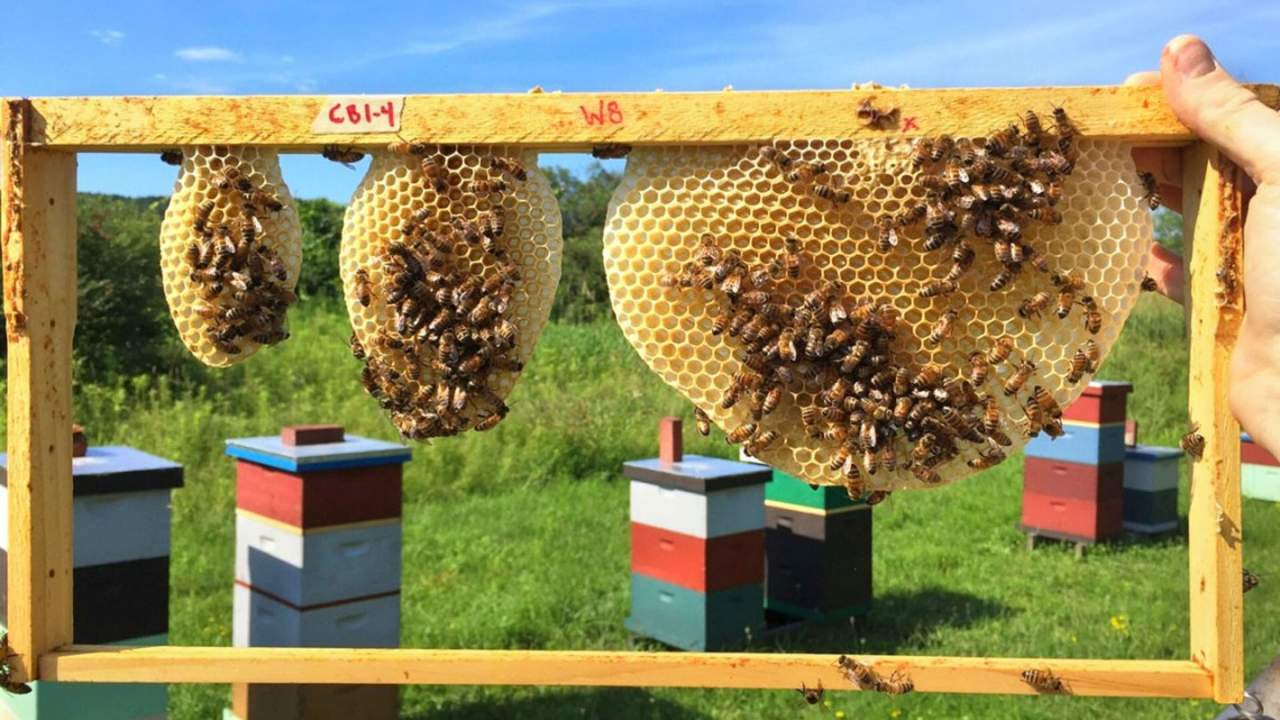 Bees are teaching engineers optimal honeycomb design techniques