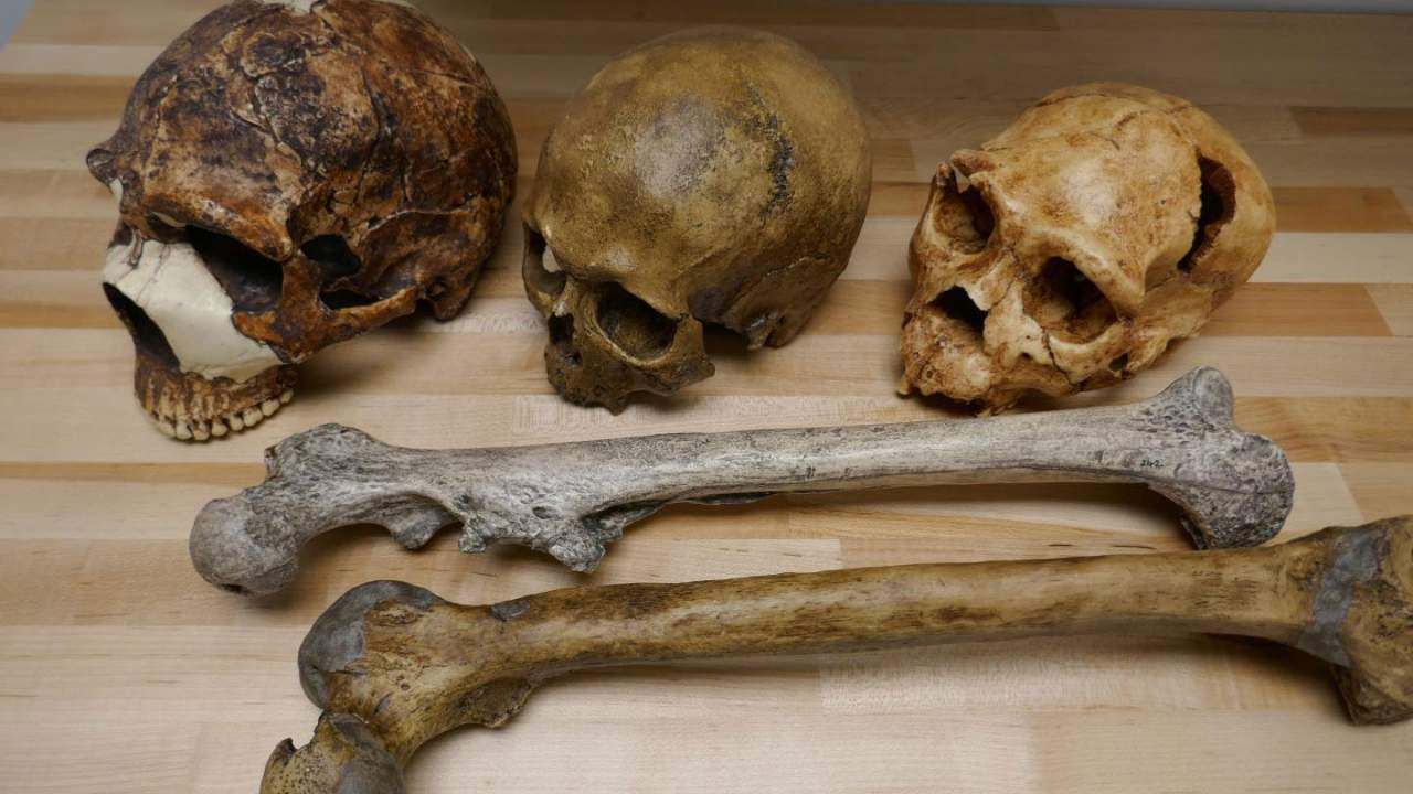 Scientists say climate change impacted the body and brain size of humans
