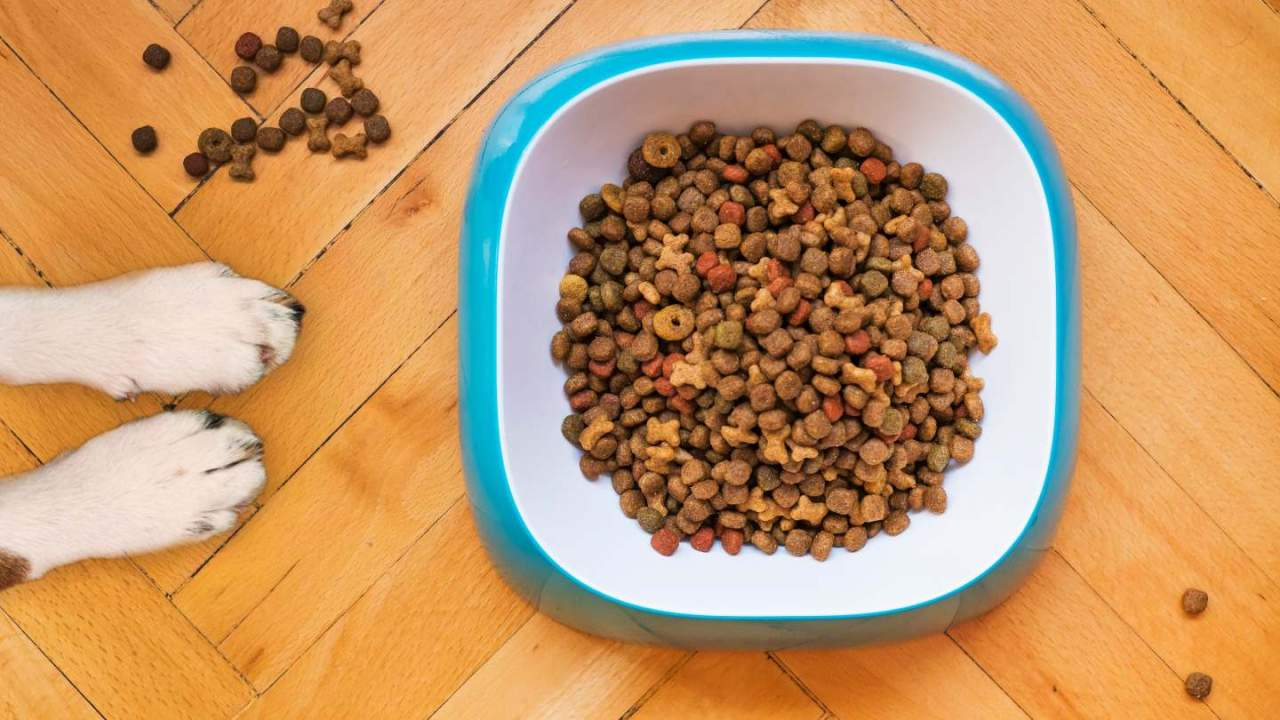 Dog food recalled yet again over aflatoxin risk: The new details