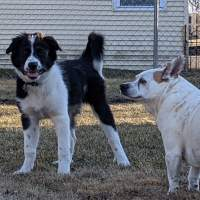 Research says some dogs may know you are lying