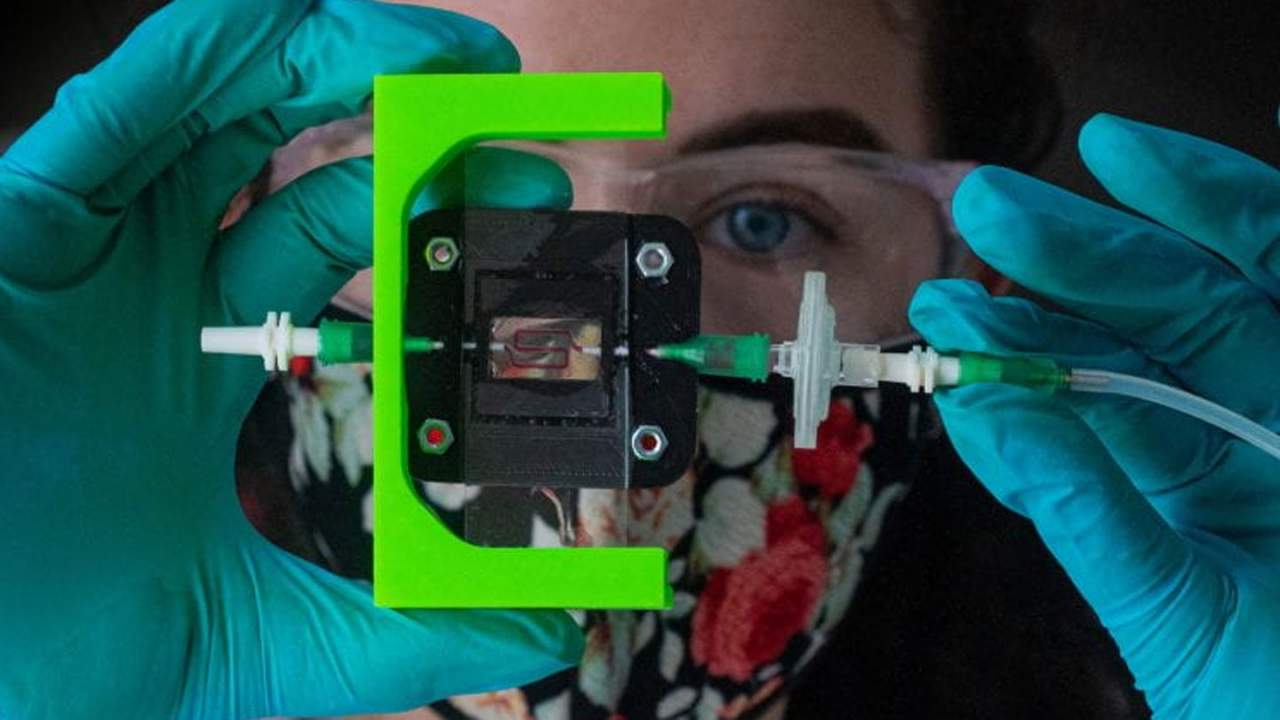 Rice researchers create an implant for diabetics that produces insulin