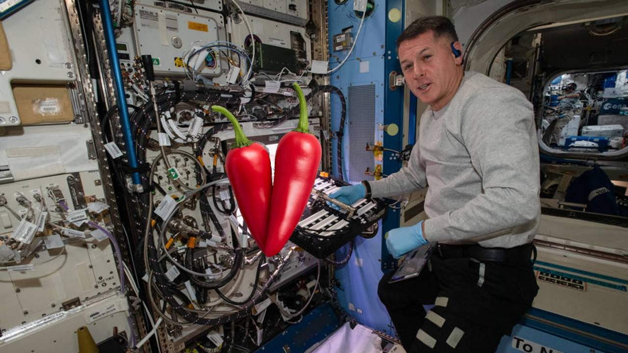 Why red hot chili peppers are growing on the International Space Station