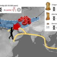 Scientists complete blood group analysis for Neandertal and Denisovan