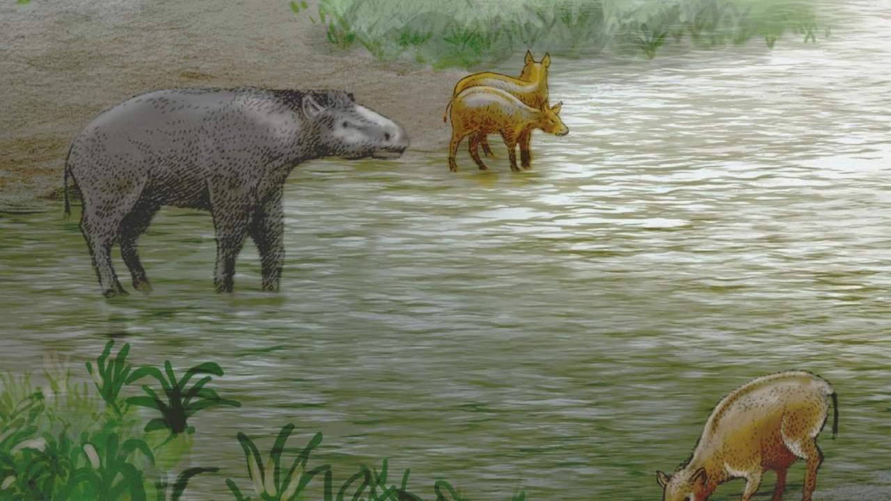 Paleontologists discover new extinct pseudo-horse species