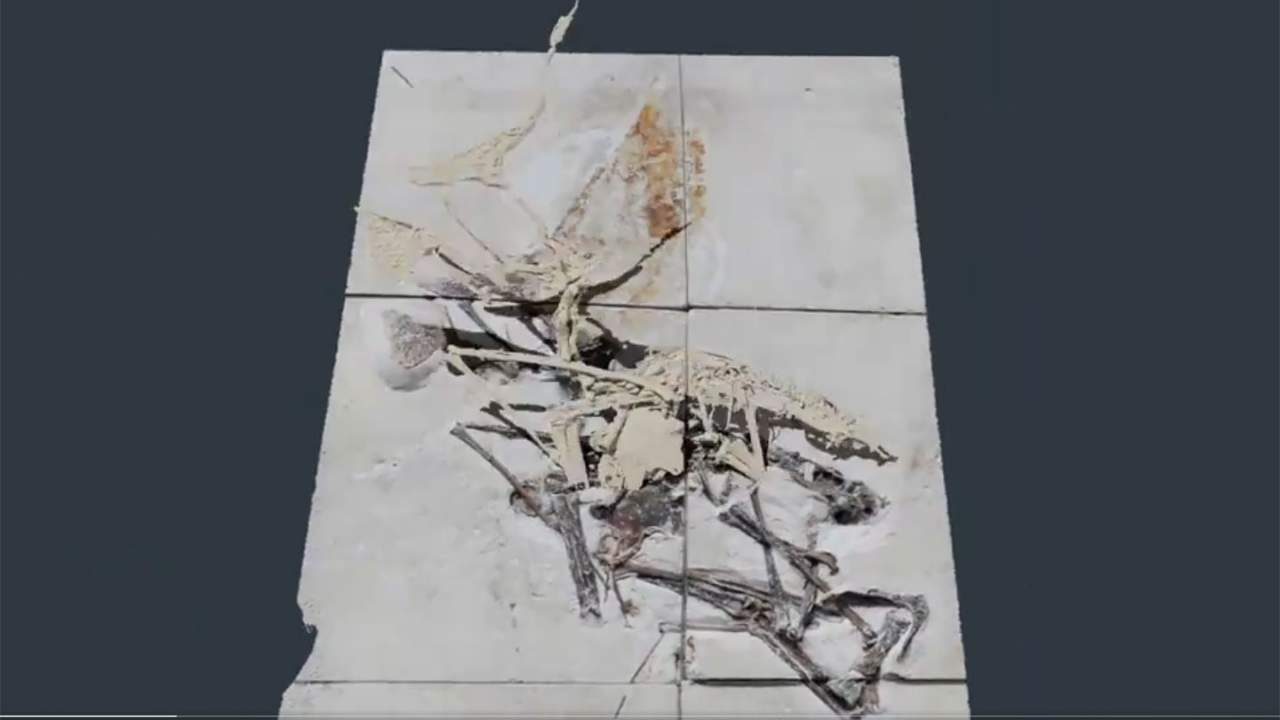 Brazilian police recovered an incredibly rare pterosaur fossil