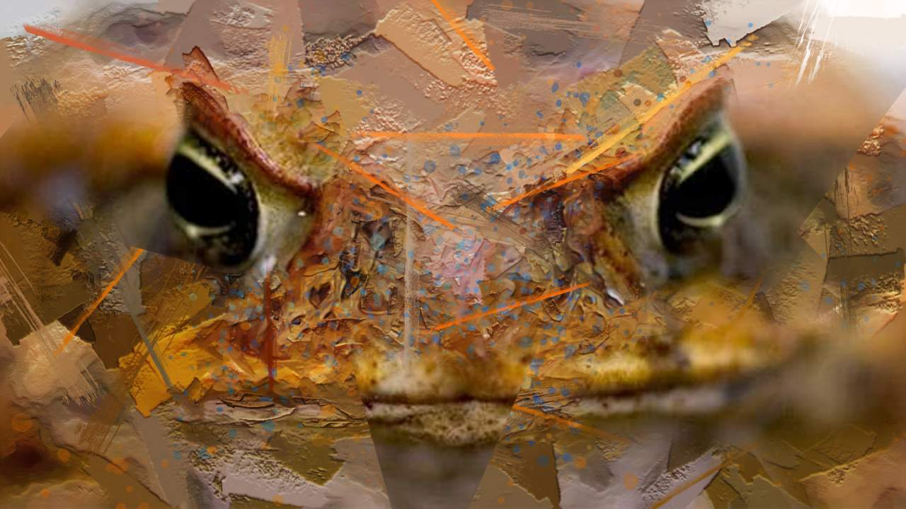 Australia's invasive cane toads show signs of cannibalism
