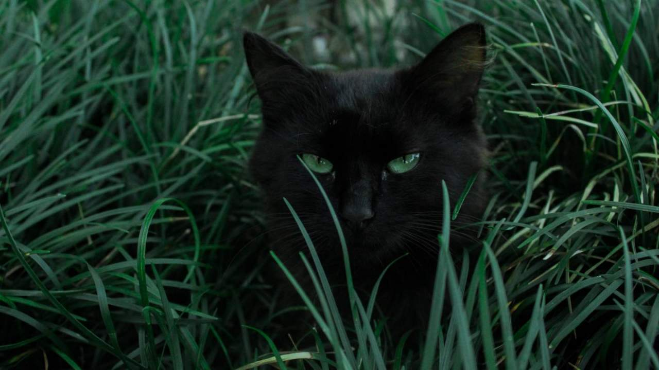 Domesticated cats hunt for primal reasons, not because they're hungry