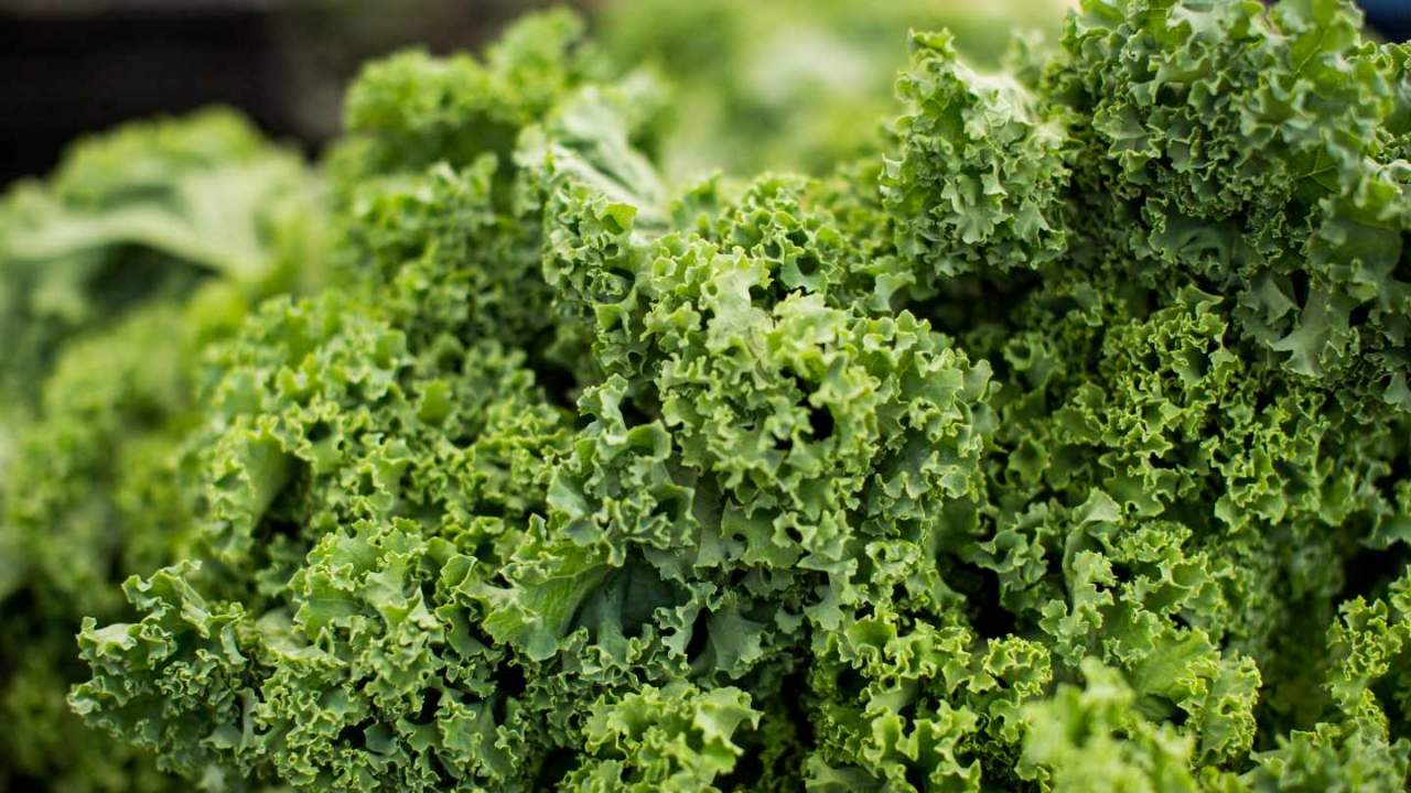 Kale recalled at Kroger and other stores over Listeria contamination