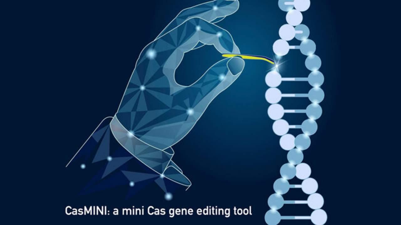 Stanford creates CasMINI gene editing system