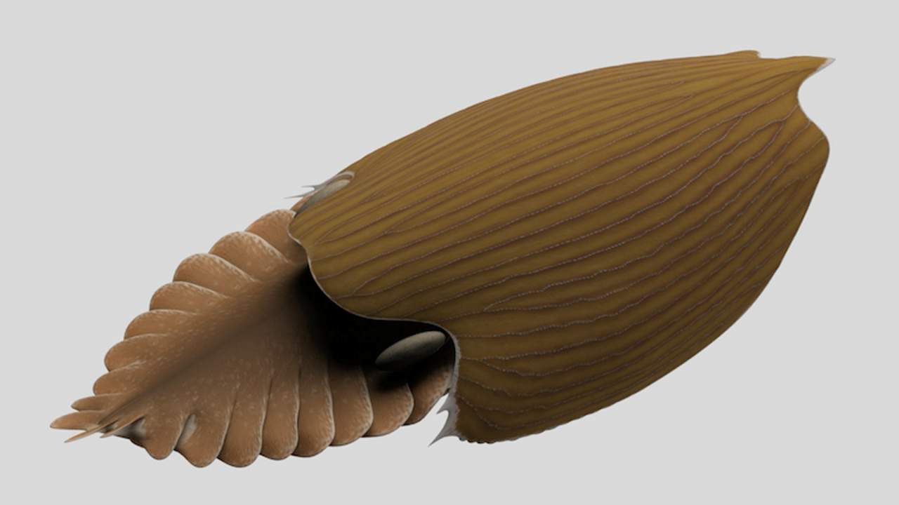 Massive Titanokorys gainesi fossil discovered in the Canadian Rockies