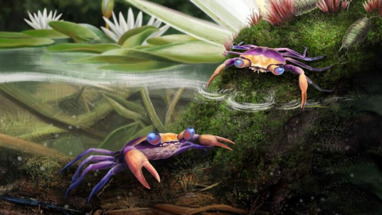 Missing-link crab discovered in amber has been preserved for 100 million years