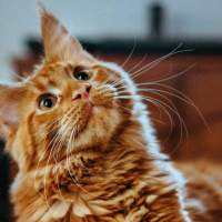 Scientists use cat bacteria to create powerful antibiotics for skin infection