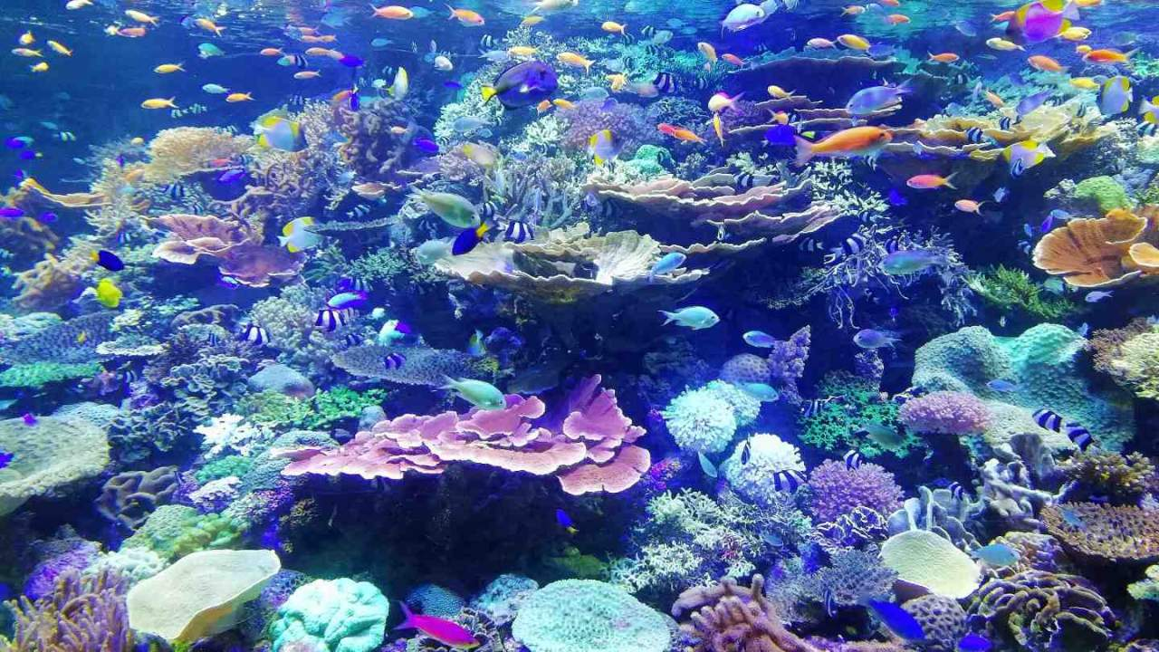 Largest coral reef study offers hope amid climate change destruction