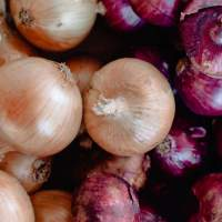 Big onion recall hits US and Canada as salmonella outbreak probe continues